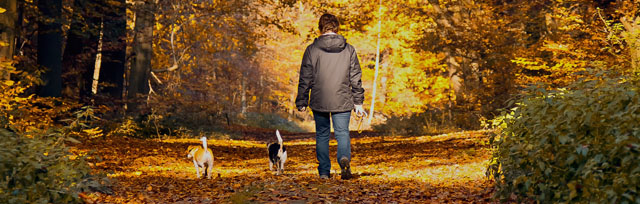 Carer walking dogs in the forest